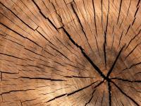 Wycinka drzew ‒ zmiana zasad