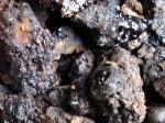 MUMIO - diament wśród suplementów