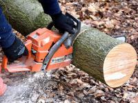 Posłowie PiS chcą zatrzymać rzeź drzew