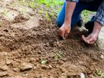 Ekologiczne sposoby na udany wysiew