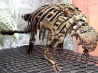 W Ameryce odkryto szkielet dinozaura z dobrze zachowaną skórą