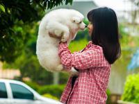 Japończycy mogą przyprowadzać swoje zwierzęta do pracy