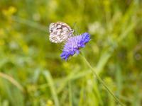 Najpopularniejsze letnie zioła i ich właściwości