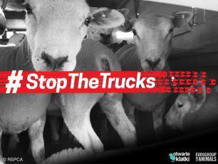Ponad milion osób chce zakończenia długodystansowego transportu żywych zwierząt