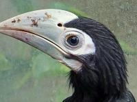 We wrocławskim zoo wykluł się jeden z najrzadszych gatunków ptaków na świecie!