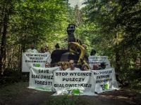 Aktywiści ponownie zablokowali ciężki sprzęt wycinający Puszczę