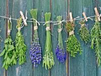 Rośliny dziko rosnące pomogą w leczeniu