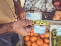 Groch - Właściwości odżywcze grochu, jego uprawa i znaczenie w kulturze