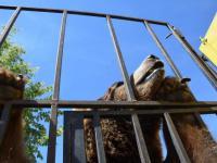 Są zarzuty w głośnej sprawie znęcania się nad zwierzętami w cyrku