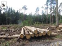 Trybunał Sprawiedliwości UE zakazuje wycinki na terenie Puszczy Białowieskiej.