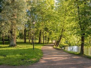 Jak skutecznie walczyć o zieleń w mieście? Zestaw narzędzi dla każdego