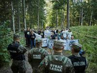Aktywiści zatrzymali wywóz drzewa ze starego fragmentu Puszczy