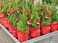Wymień odpady na  świąteczne drzewko
