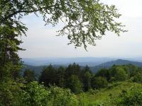 Bezcenne tereny puszczy karpackiej zagrożone masową wycinką