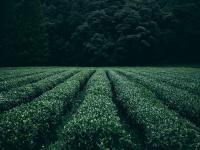 Przyspiesza wzrost roślin i ulega biodegradacji – polscy naukowcy opracowali innowacyjną agrowłókninę