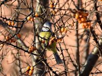 Ptaszkowe Love czyli pomagamy miejskim ptakom