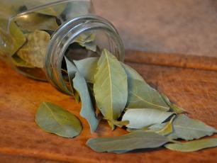 Liść laurowy – zioło zwycięzców