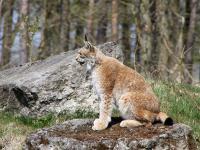 Wirtualna Polska podważa wiarygodność działań WWF Polska
