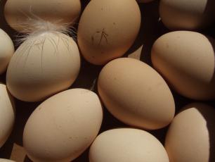 Wedel rezygnuje z jaj z chowu klatkowego