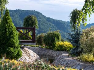 Oryginalne iglaki w ogrodzie