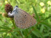 Podstępny jak motyl