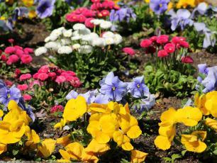 Ogród kwiatowy – jak go urządzić, by cieszył oko nie tylko latem?