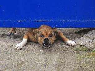 Surowe kary za niedopilnowanie zwierząt