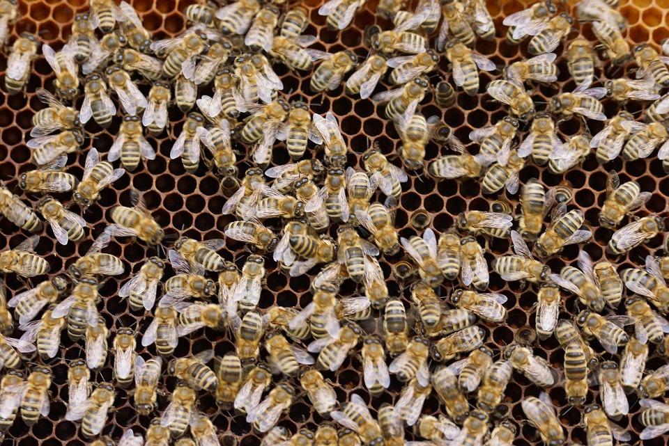 Rolnik opryskał pole rzepaku ‒ zginęło 10 milionów pszczół