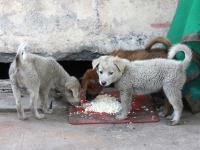 """Rosja """"oczyszcza"""" ulice z bezdomnych psów przed Mundialem"""