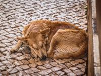 Zabijanie psów nie jest rozwiązaniem. Wywiad z Anną Iżyńską