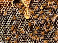 Sztuczna inteligencja w pszczelej pasiece