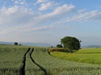 W Polsce przybywa ekologicznych producentów