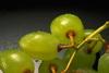 Baśniowe owoce 99