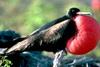 Dzikie Galapagos 21