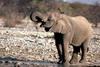 Słonie 72