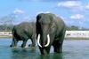 Słonie 91