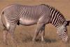 Zwierzęta afrykańskie 69