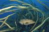 W wodach Karaibów 24