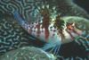 Podwodne życie w tropikach 31
