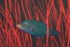 Podwodne życie w tropikach 85