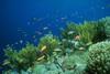 Fotografia podwodna 100