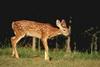Dzikie potomstwo 82
