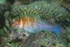 Podwodne życie w tropikach 87