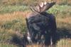 Park Narodowy Yellowstone 78