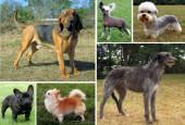 Psy różnych ras