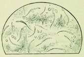 Turbatrix aceti