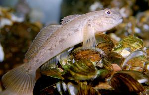 By Eric Engbretson, U.S. Fish and Wildlife Service [Public domain], via Wikimedia Commons