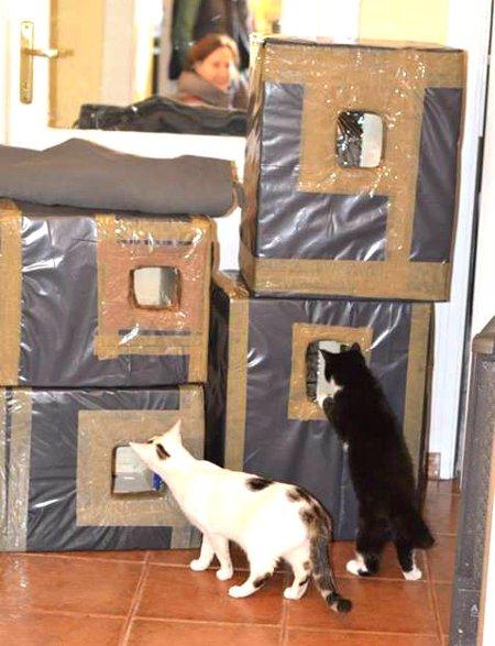 f176b9c3b7719e Jak zrobić domek dla bezdomnego kota? | ekologia.pl