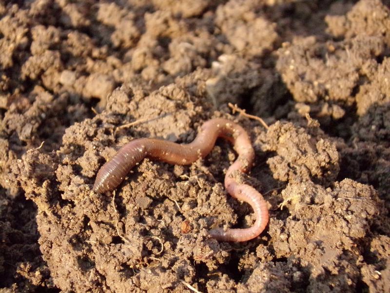 Udział organizmów żywych w powstawaniu gleby