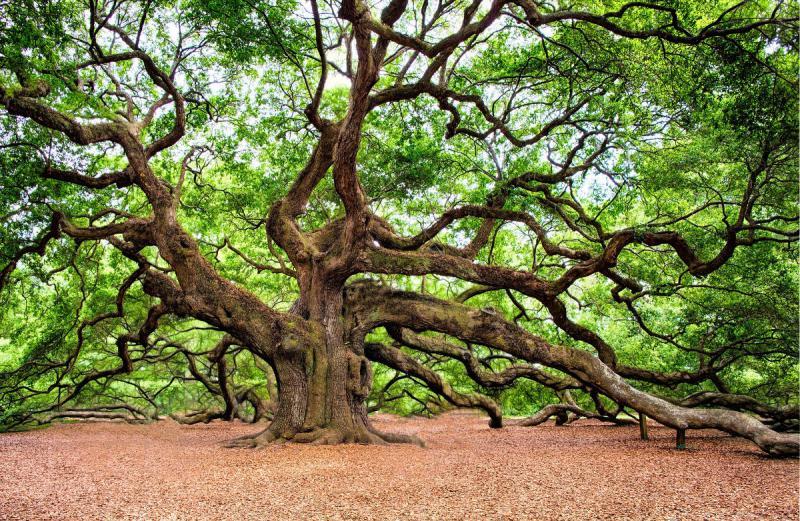 dendrochronologia datowania pierścieni drzew